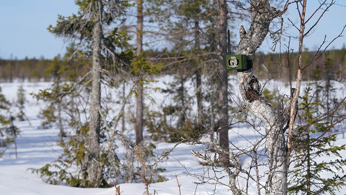 Boly Guard MG984G riistakamera lähettää kuvat ja videot suoraan Seneram -pilvipalveluun.